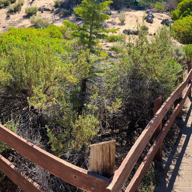 """""""Pano of wooden hiking trail in Lake Tahoe"""" stock image"""