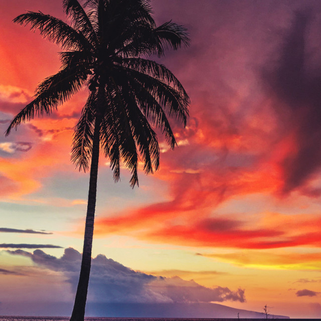 """""""Lone Palm at Sunset"""" stock image"""