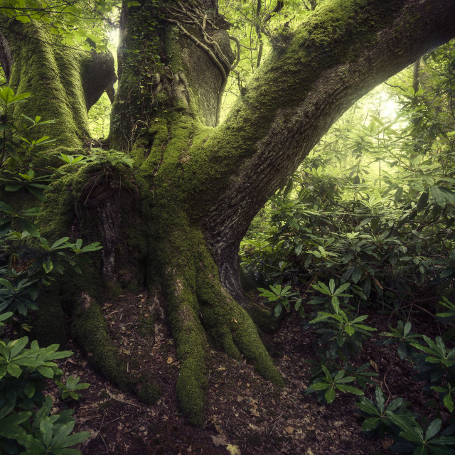 """""""The Ent"""" stock image"""