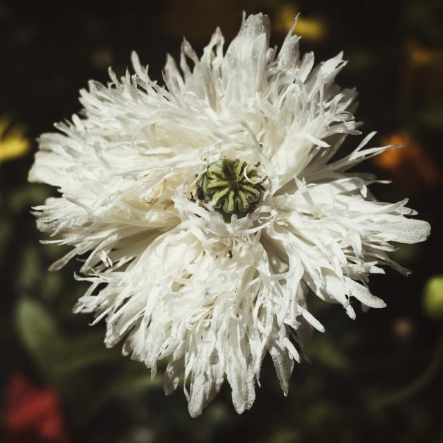 """""""Tangled Flower"""" stock image"""