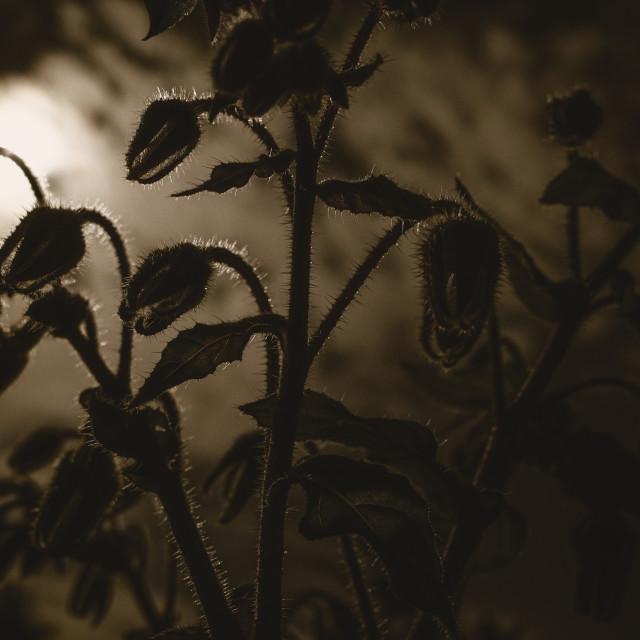 """Nibbling Flowers"" stock image"