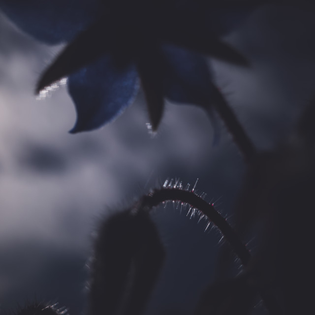 """Moody Flower"" stock image"