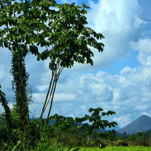 """""""View of the mountains from Sittee River Village"""" stock image"""