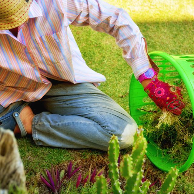 """Gardening"" stock image"
