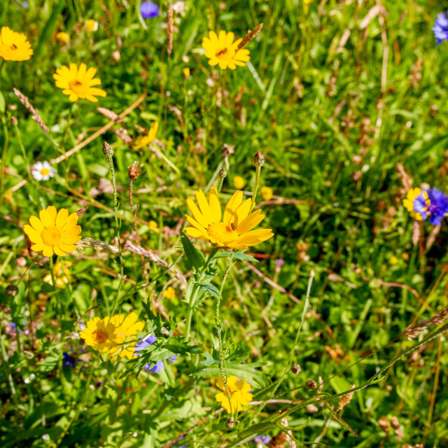 """Wild Flower and Grass Foliage Background."" stock image"