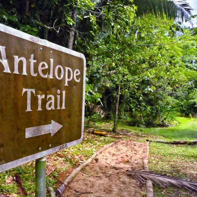 """Antelope Trail"" stock image"