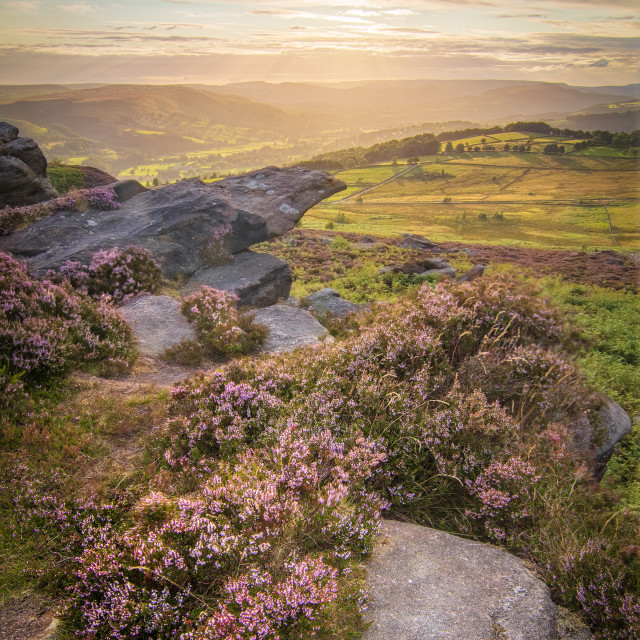 """""""Hope Valley Heather"""" stock image"""