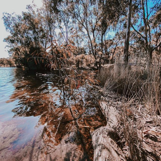 """Lake Shore"" stock image"