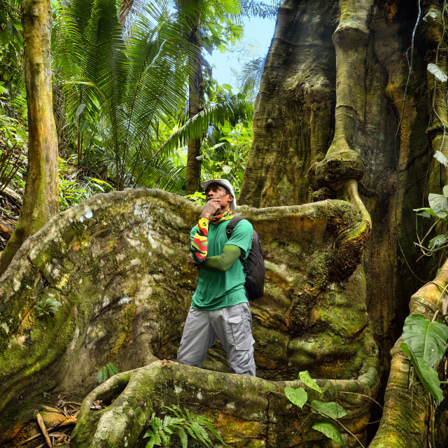 """Man standing between the roots of a ceiba tree in the jungle"" stock image"