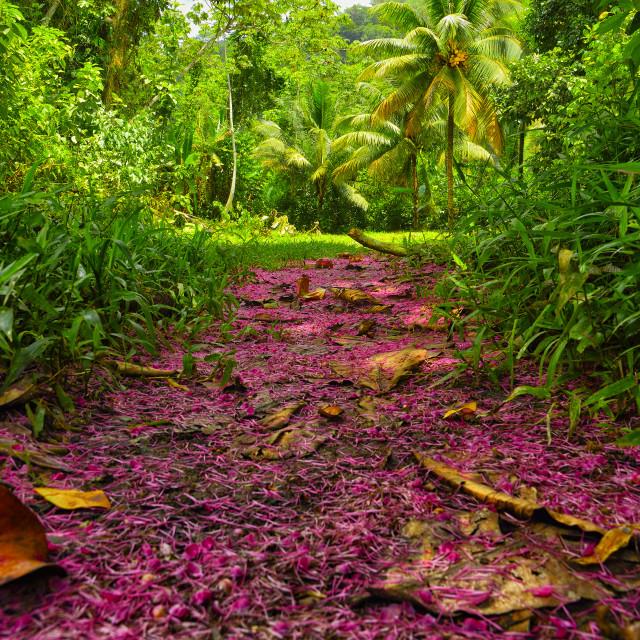 """Tree blossom fallen on a jungle trail"" stock image"
