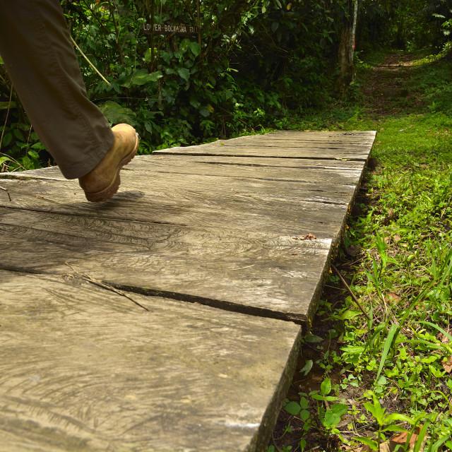 """Hiking through the rainforest"" stock image"