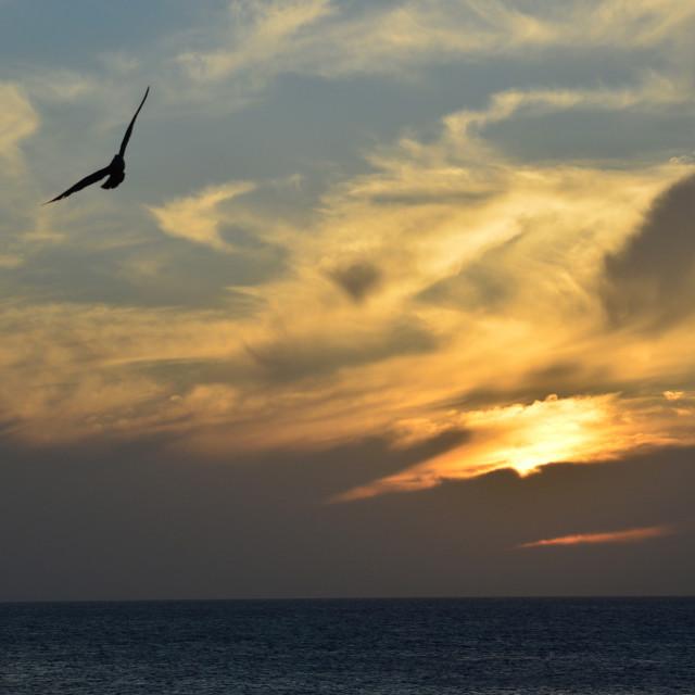 """Atlantic Ocean Sunset with Seagulls"" stock image"