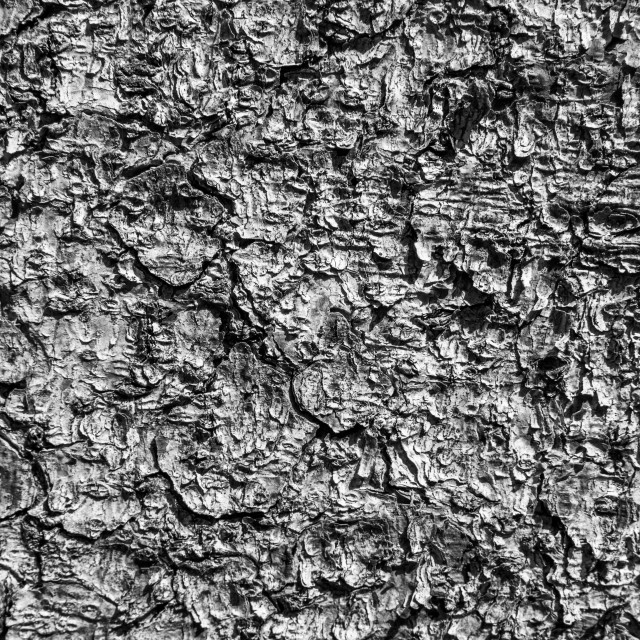 """Tree Bark Detail. Monochrome."" stock image"