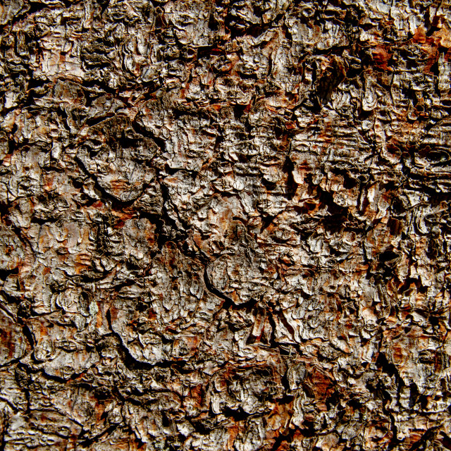 """Tree Bark Detail."" stock image"