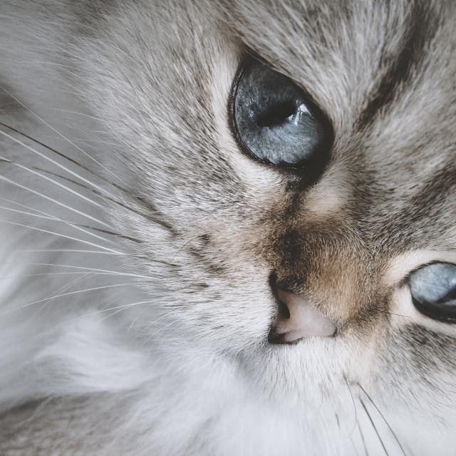 """""""My Cat"""" stock image"""