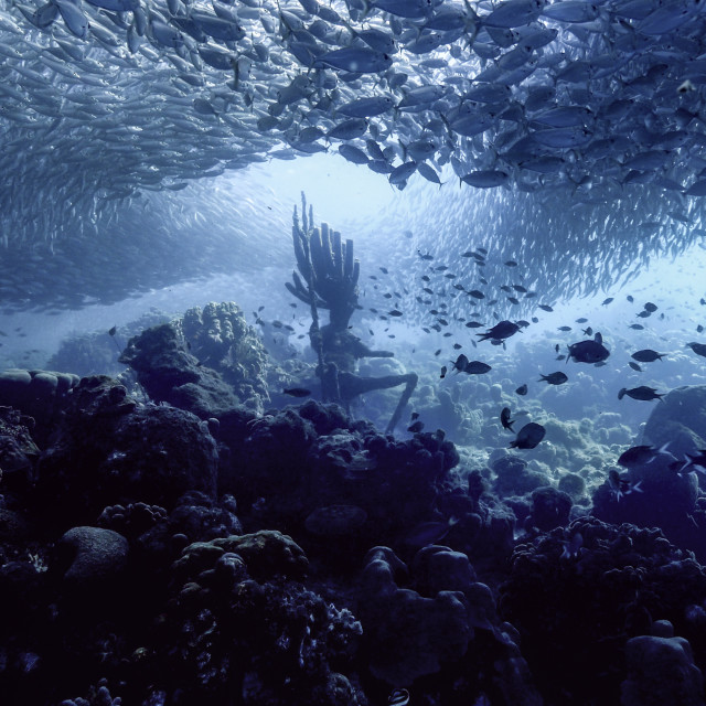 """""""Bait ball / school of fish in turquoise water of coral reef in Caribbean Sea / Curacao"""" stock image"""