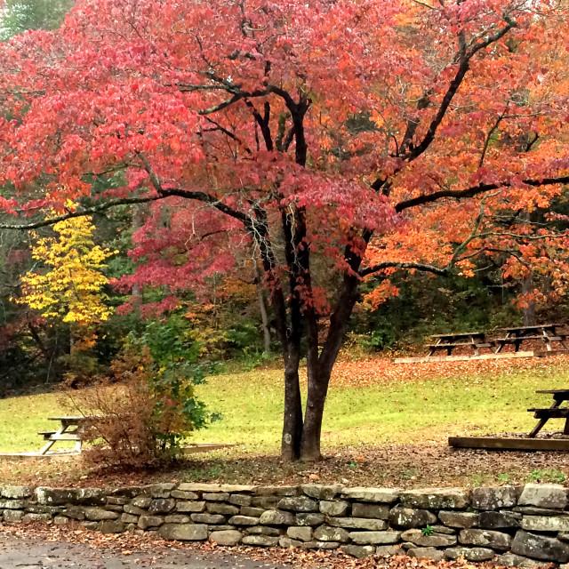 """Autumn in North Carolina"" stock image"