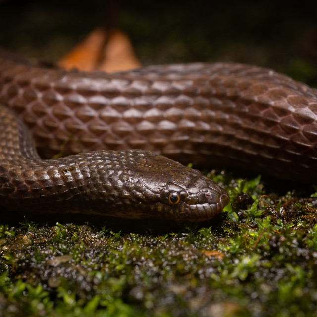 """Striped Stream Snake"" stock image"
