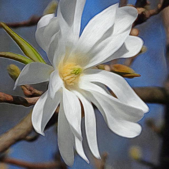 """PhotoArt of White Flower"" stock image"