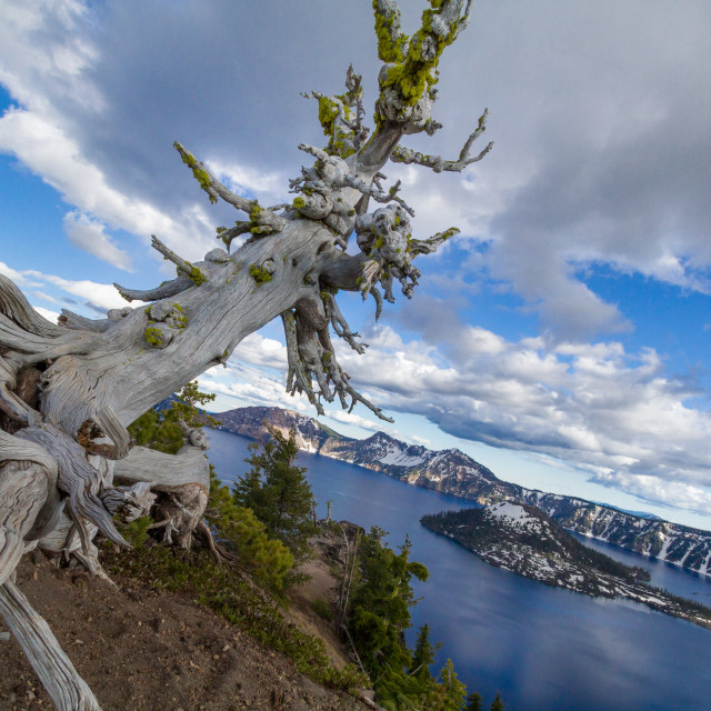 """King of Crater Lake"" stock image"