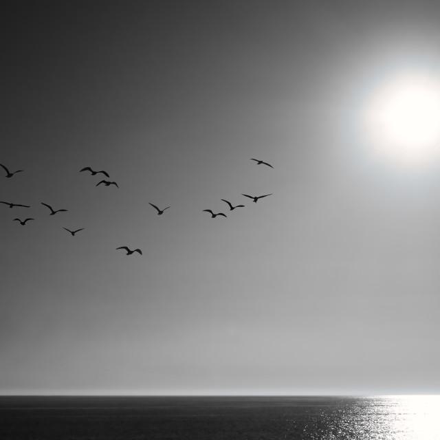 """Silent Flight"" stock image"