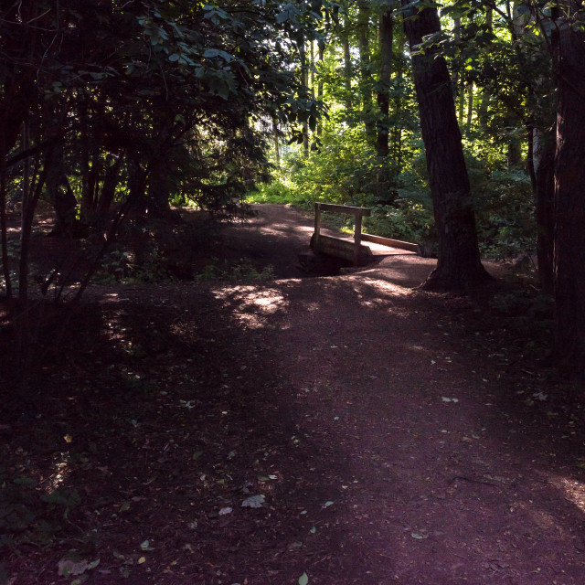 """A winding woodland walk"" stock image"
