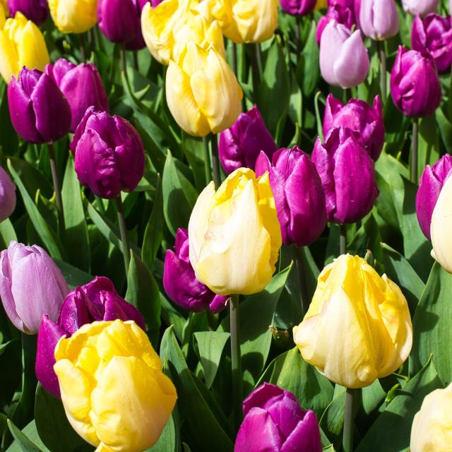 """Festival of Flowers"" stock image"
