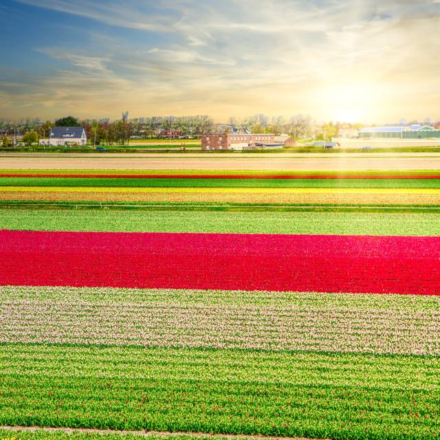 """Dutch Sunset"" stock image"