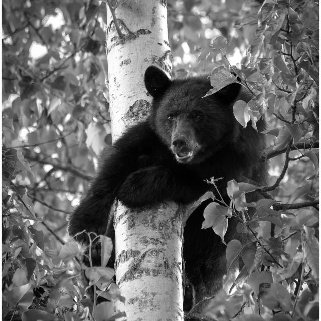 """Hello bear"" stock image"