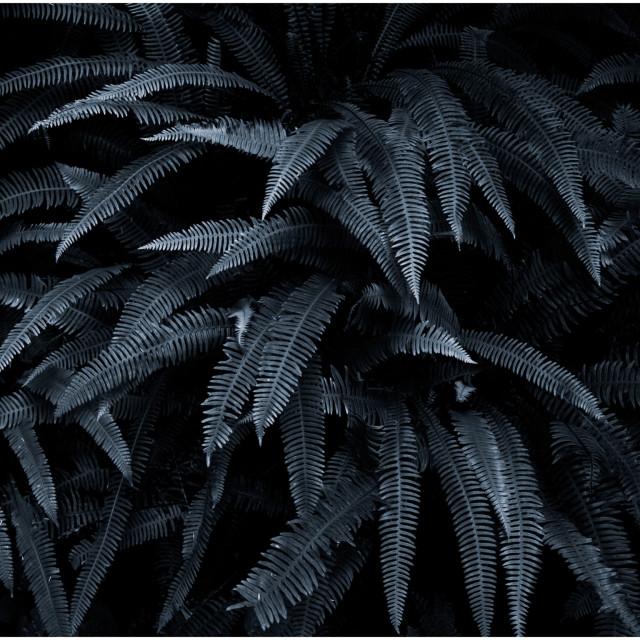"""Sterling Ferns"" stock image"