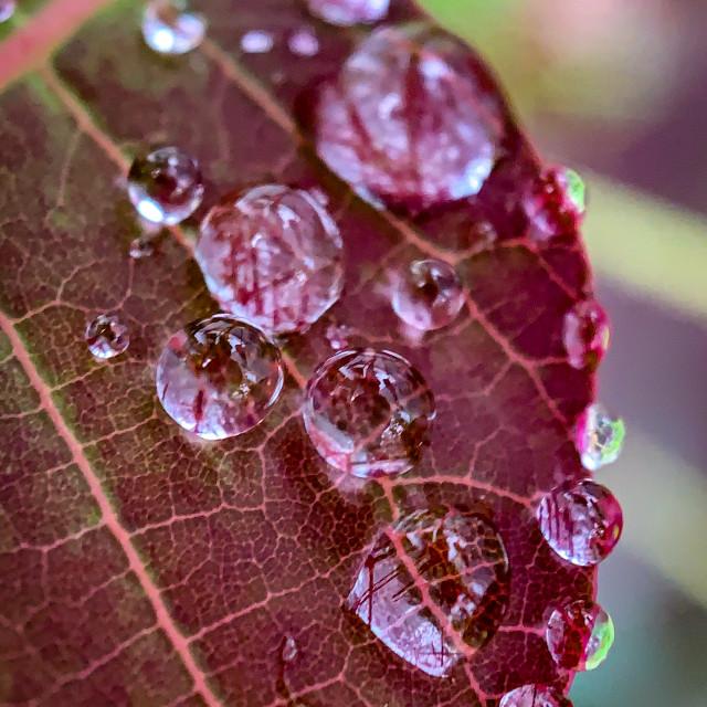 """Drops on leaf"" stock image"
