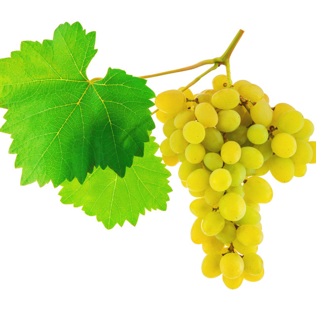 """Bunch green grapes with leaves isolated on a white background"" stock image"