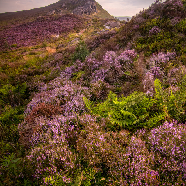 """""""Ramshaw Heather and Ferns"""" stock image"""