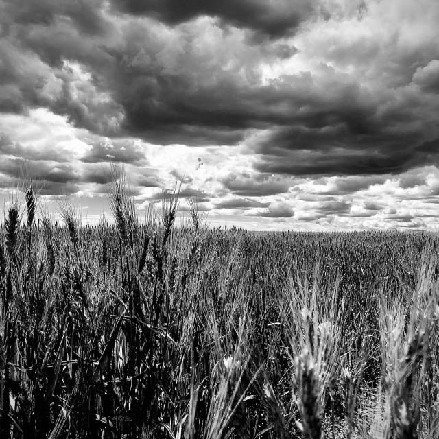 """Field of Grays"" stock image"