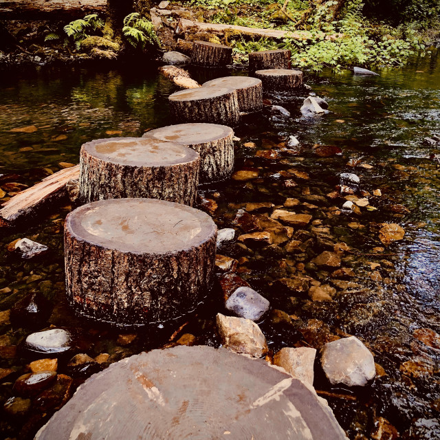 """""""Stepping Stumps"""" stock image"""