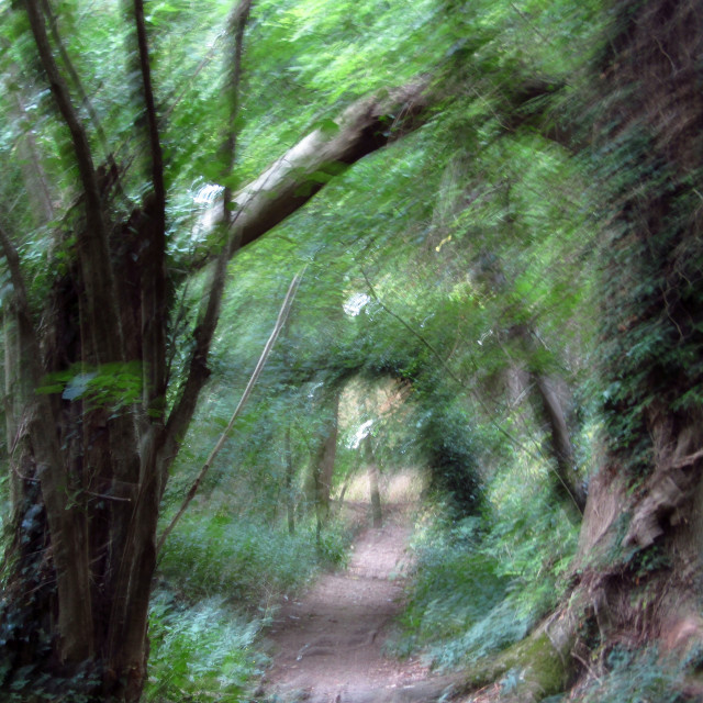 """Blurred trail in forest"" stock image"