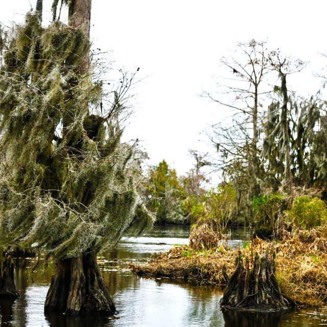 """""""New Orleans Swamp"""" stock image"""