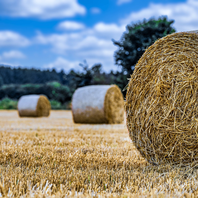 """Hay Bales from Cottenham Corn Field, Cambridge UK."" stock image"