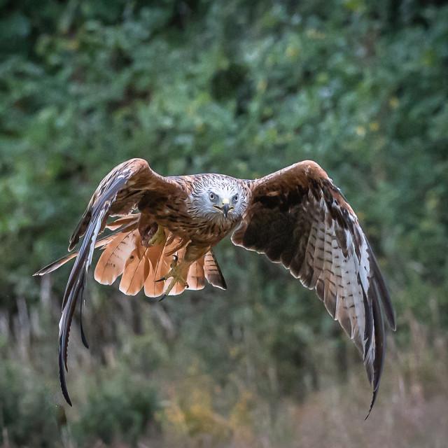"""""""Kite Flight"""" stock image"""