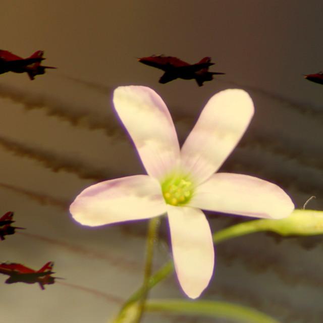 """red arrow flypast/clover-flower"" stock image"
