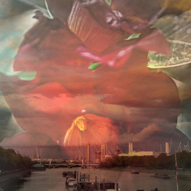 """""""Red bell flower over Chelsea bridge"""" stock image"""