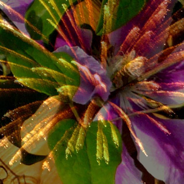 """""""Flower-firework"""" stock image"""