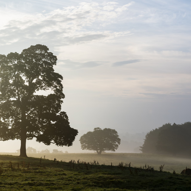 """""""Early morning mist."""" stock image"""
