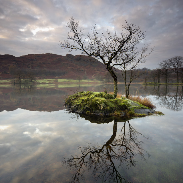 """""""Lone tree on Rydal Water"""" stock image"""
