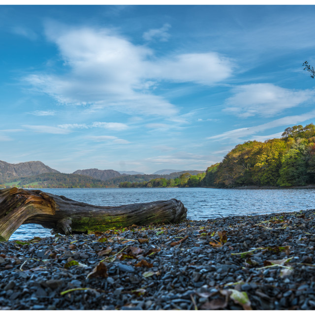 """""""Coniston with driftwood"""" stock image"""