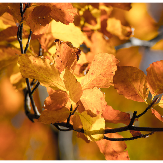 """""""Autumnal Colours"""" stock image"""
