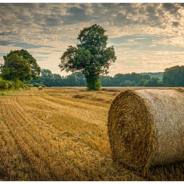 """Sunrise Over Harvest"" stock image"