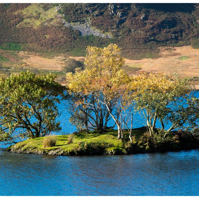 """""""Island in Lake"""" stock image"""