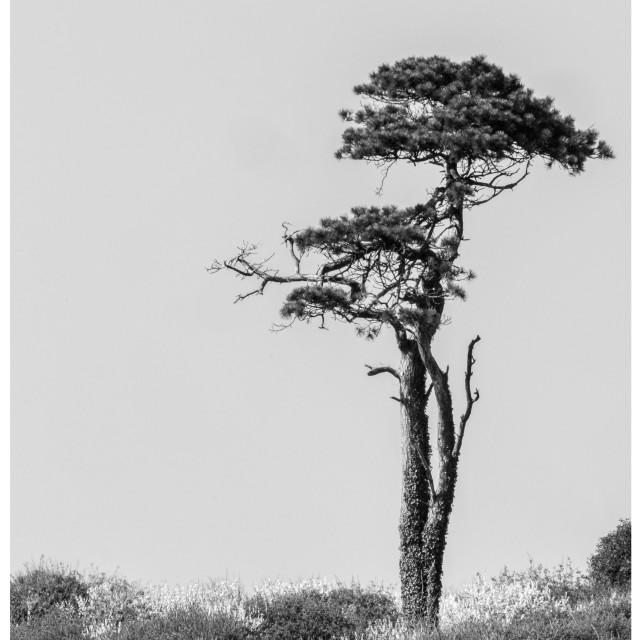 """Long Tree"" stock image"