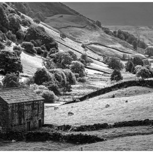 """North Yorkshire Stone Walls"" stock image"